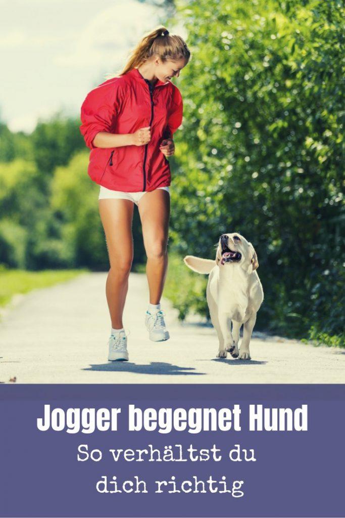 Hunde und Jogger - Die Begegnung ist nicht immer unproblemantisch. In diesem Artikel findest du die 5 besten Tipps für Jogger und Hundebesitzer.
